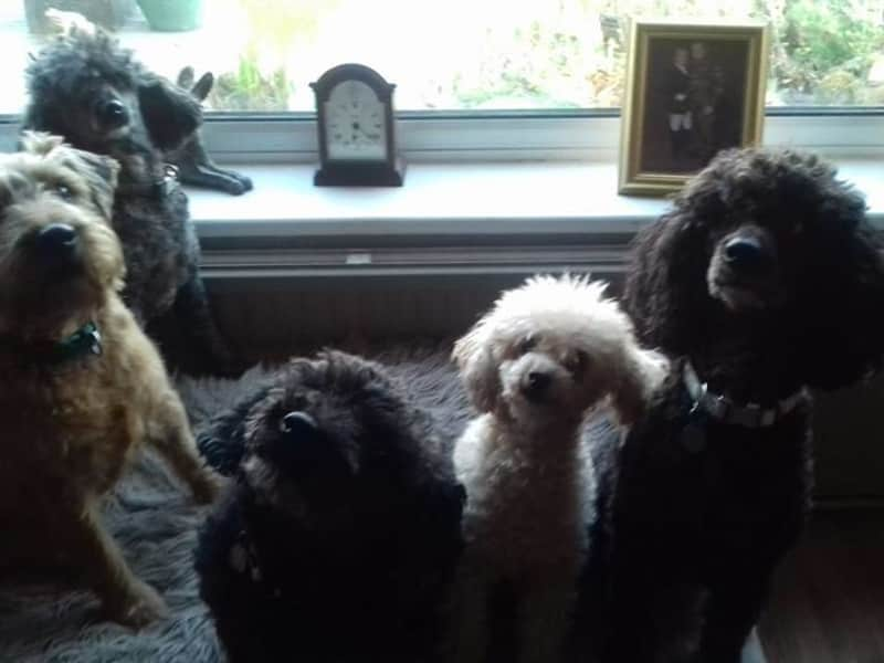 Housesitting assignment in Llangefni, United Kingdom