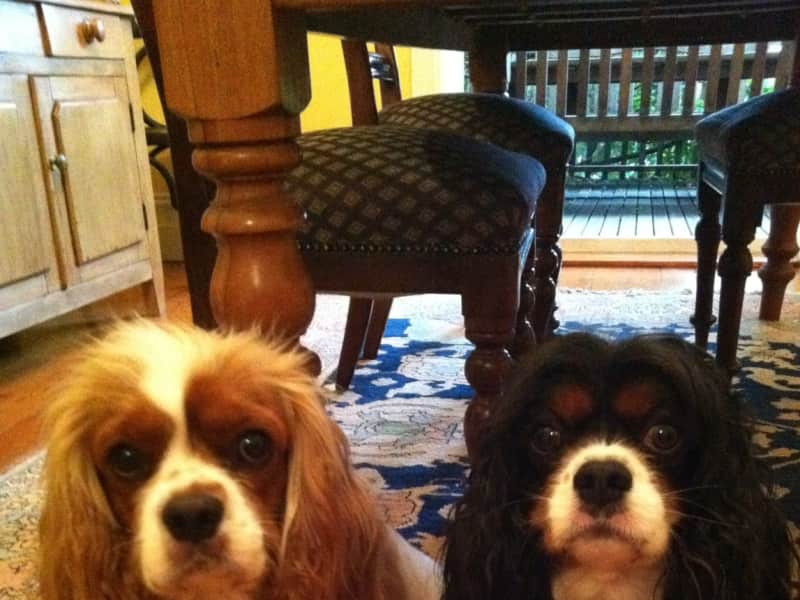 Housesitting assignment in Centennial Park, New South Wales, Australia