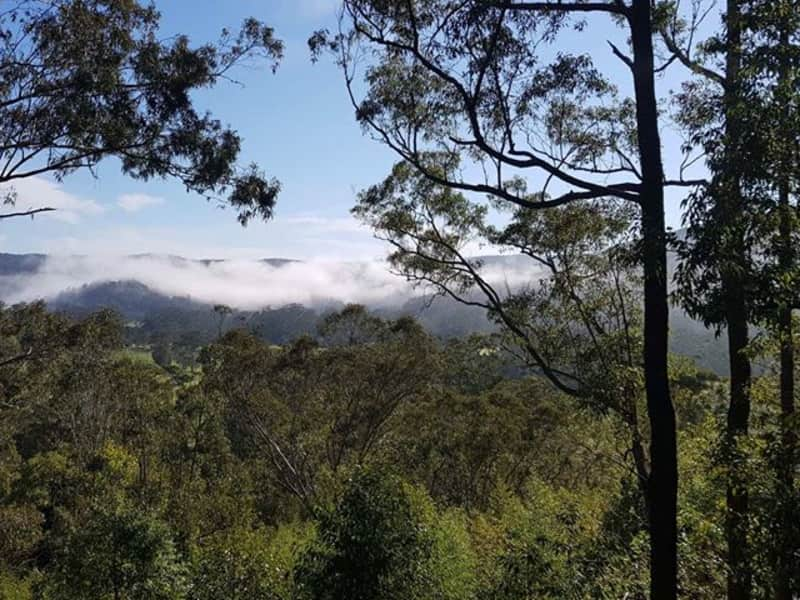 Housesitting assignment in Yarramalong, New South Wales, Australia