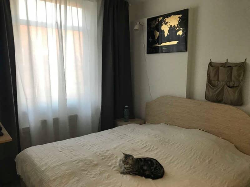 Housesitting assignment in Budapest VIII. kerület, Hungary