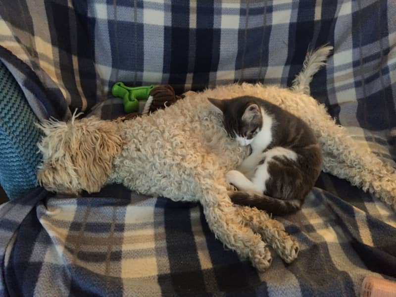 Housesitting assignment in Ditcheat, United Kingdom