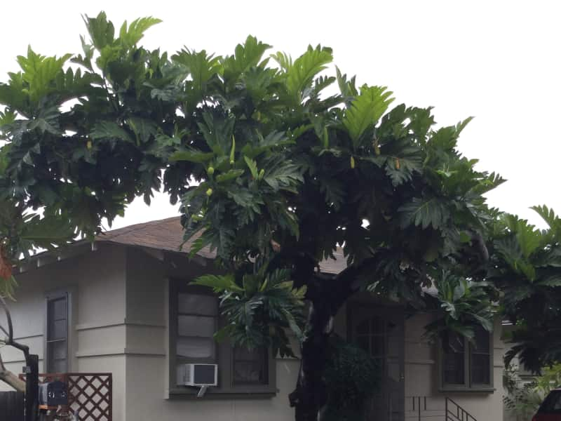Housesitting assignment in Honolulu, Hawaii, United States