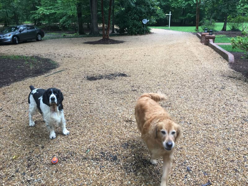 Housesitting assignment in New Kent, Virginia, United States