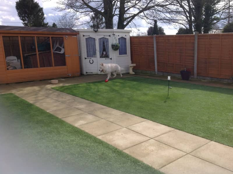 Housesitting assignment in Telford, United Kingdom