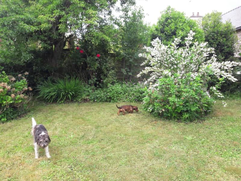 Housesitting assignment in Pontivy, France