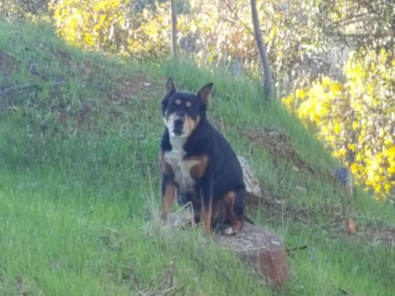 Housesitting assignment in Toodyay, Western Australia, Australia