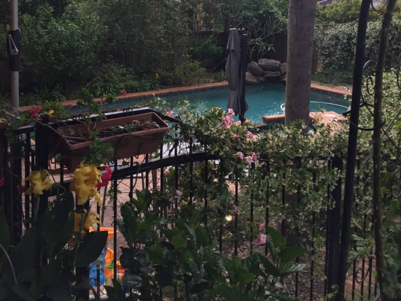 Housesitting assignment in Glenhaven, New South Wales, Australia
