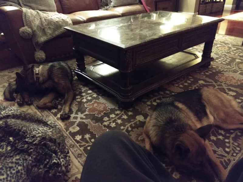 Housesitting assignment in Trenton, Missouri, United States