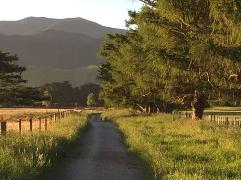 Housesitting assignment in Greytown, New Zealand