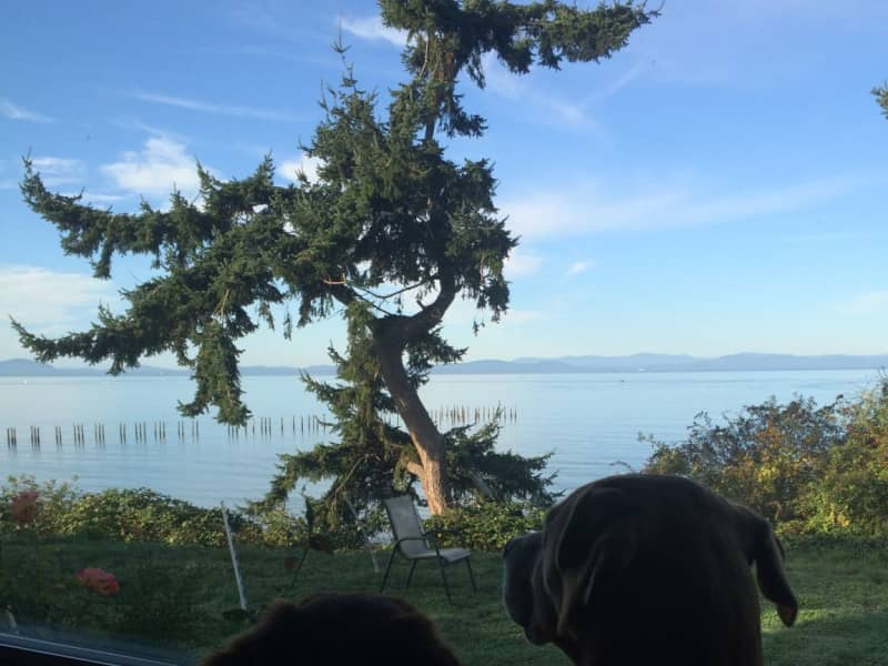 Housesitting assignment in Point Roberts, Washington, United States