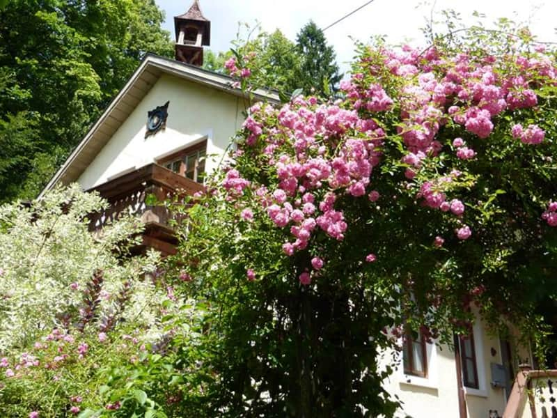 Housesitting assignment in Bad Ischl, Austria