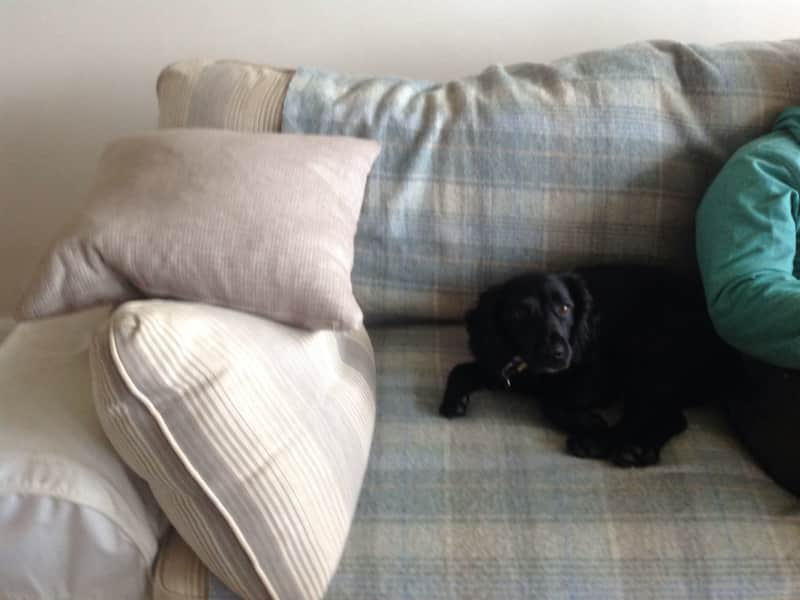 Housesitting assignment in Padstow, United Kingdom