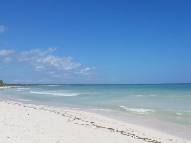 Housesitting assignment in Mahahual, Mexico