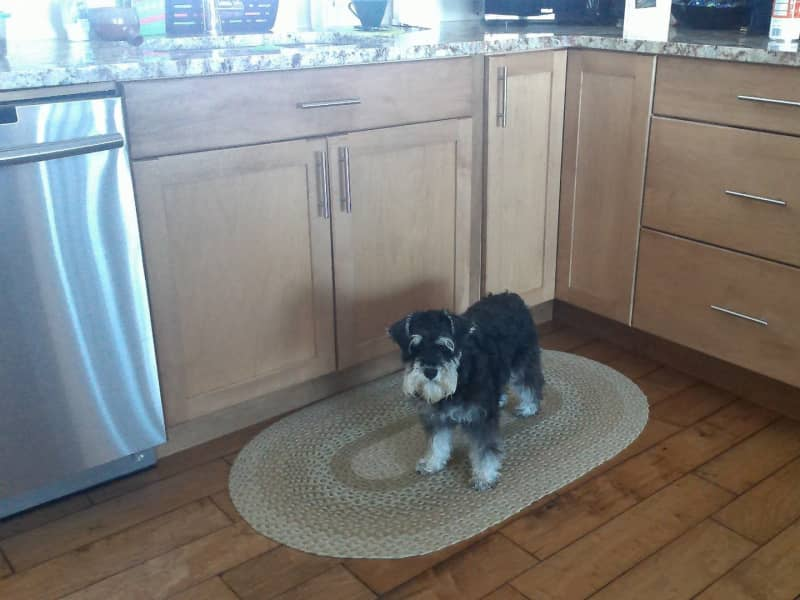 Housesitting assignment in Peterborough, Ontario, Canada