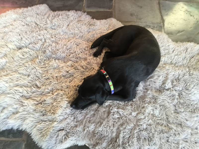 Housesitting assignment in Broadway, United Kingdom