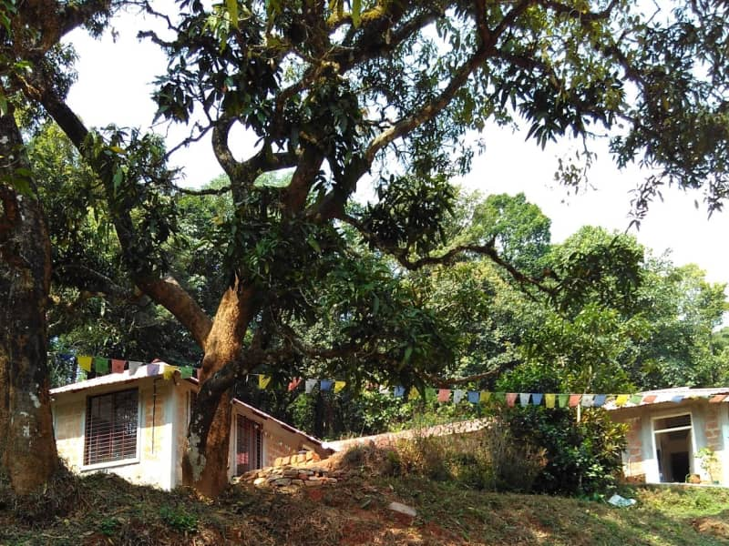 Housesitting assignment in Madikeri, India