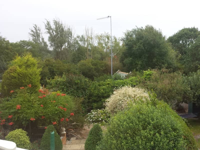 Housesitting assignment in Wivenhoe, United Kingdom