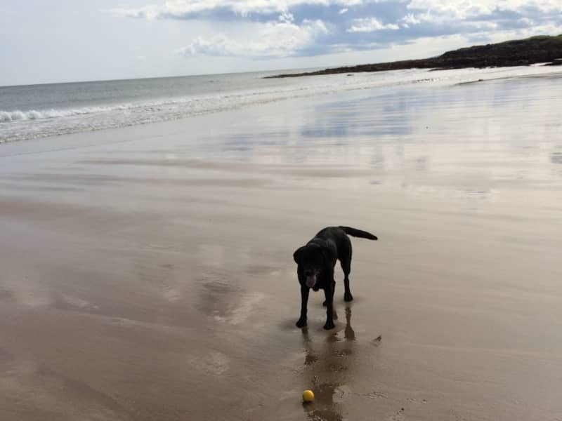 Housesitting assignment in North Berwick, United Kingdom