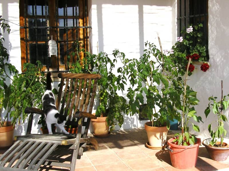 Housesitting assignment in Alcalá de los Gazules, Spain