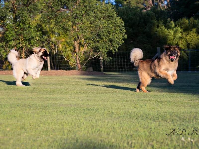 Housesitting assignment in Cedar Grove, Queensland, Australia