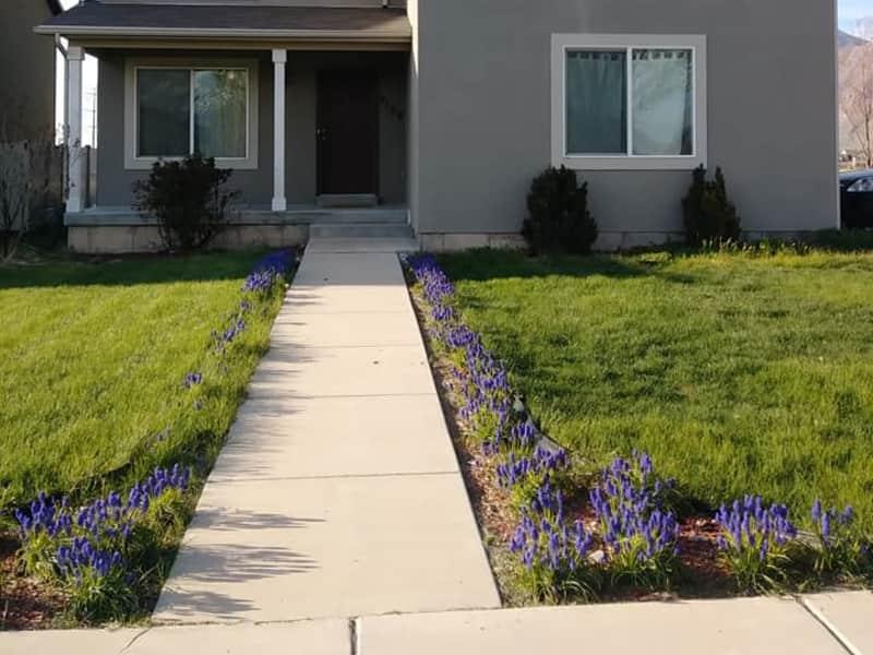 Housesitting assignment in Springville, Utah, United States