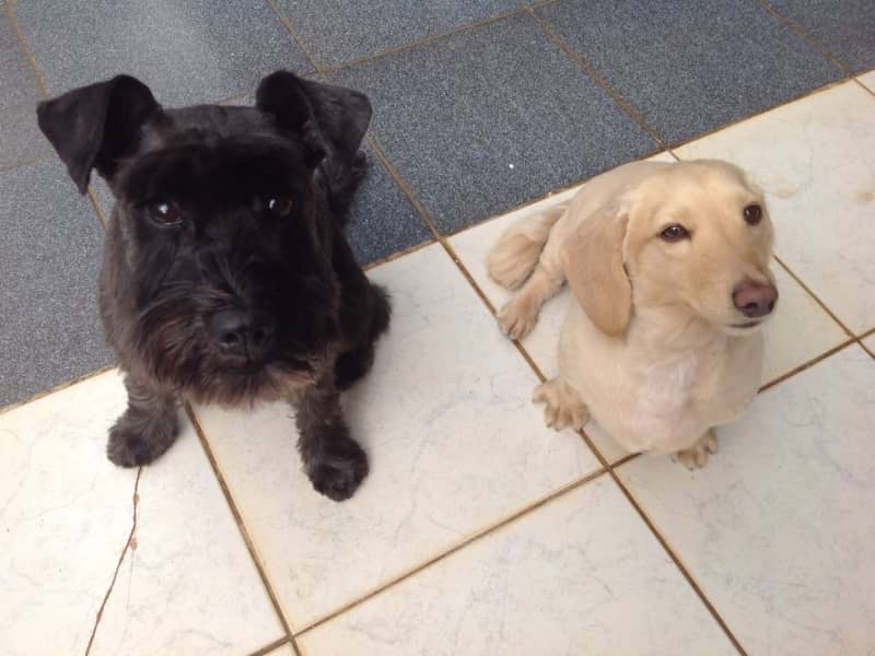 Housesitting assignment in Pollença, Spain
