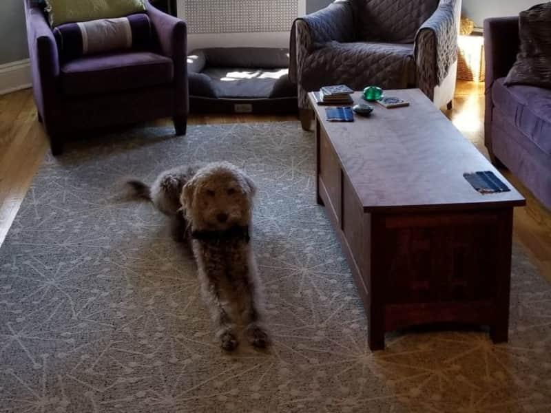Housesitting assignment in Brookline, Massachusetts, United States