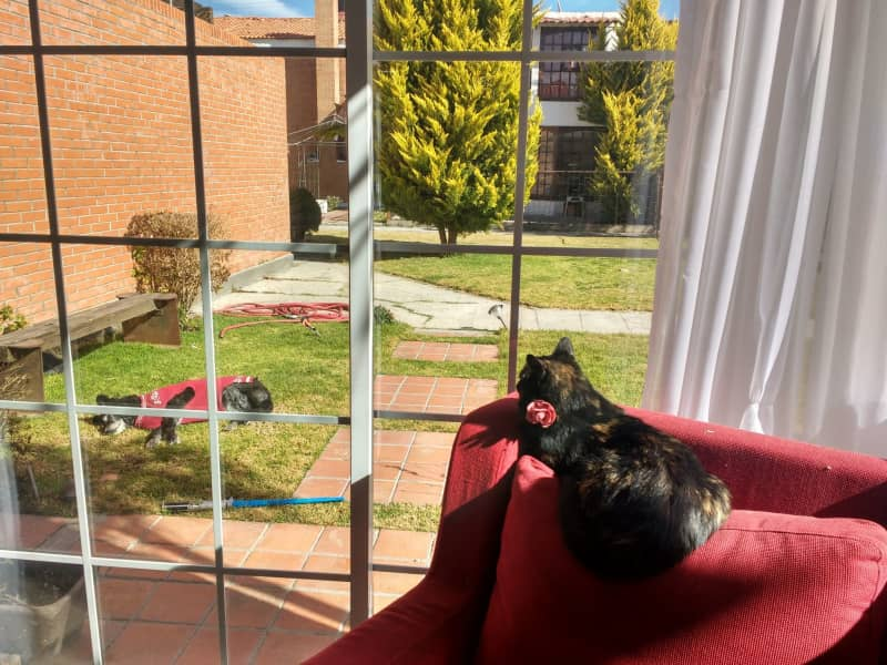 Housesitting assignment in Pachuca de Soto, Mexico
