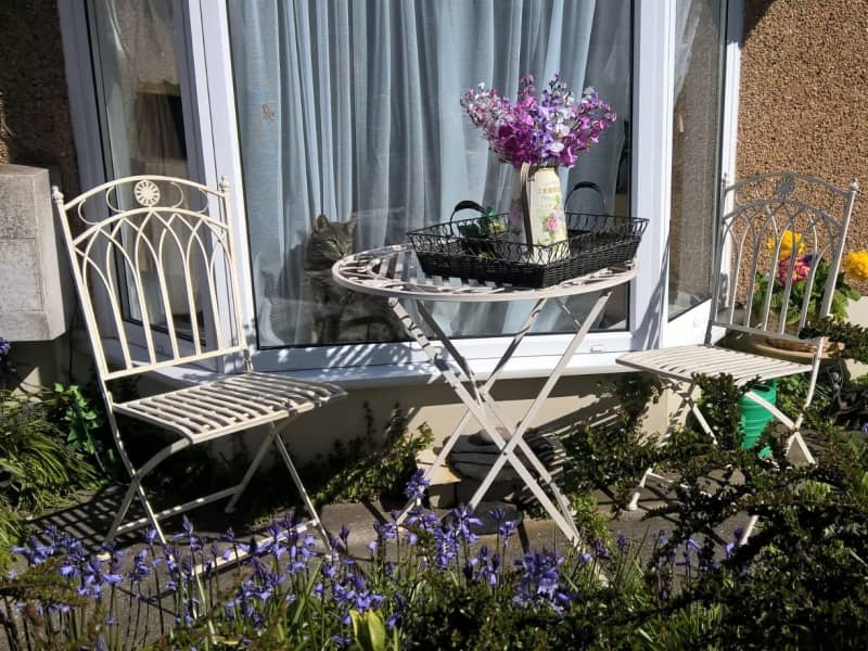 Housesitting assignment in Swansea, United Kingdom