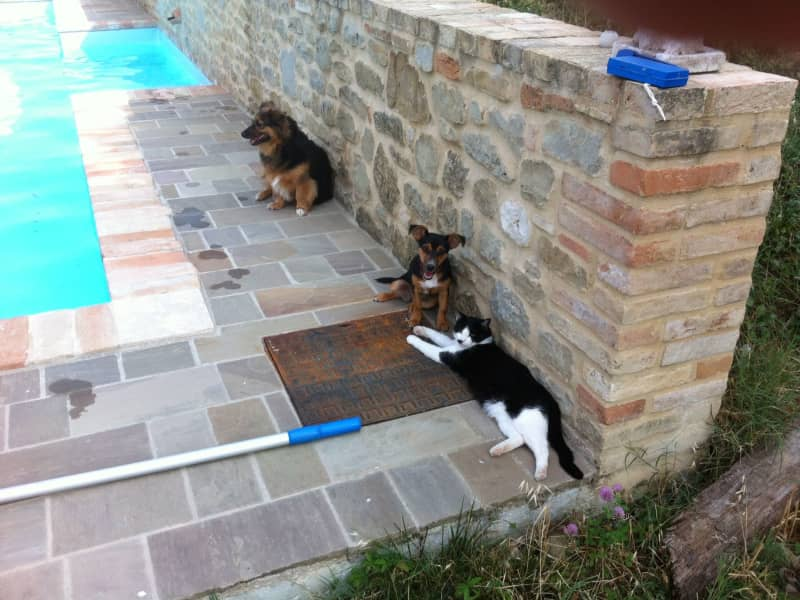Housesitting assignment in Penna San Giovanni, Italy