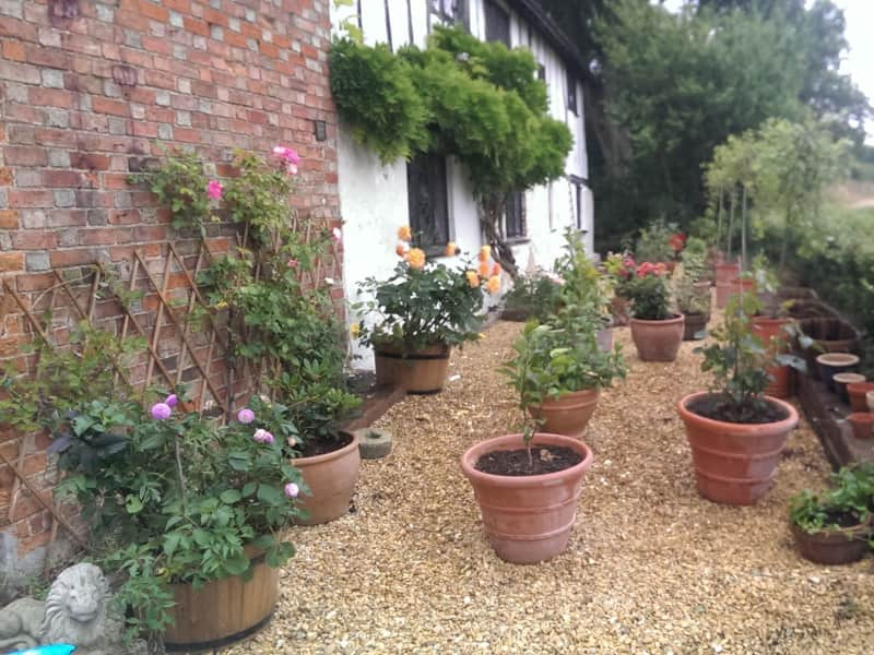 Housesitting assignment in Bedford, United Kingdom