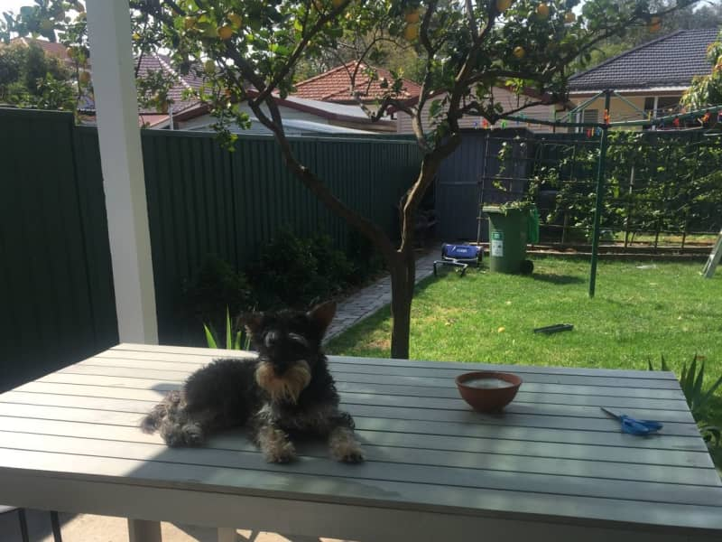 Housesitting assignment in Rosebery, New South Wales, Australia