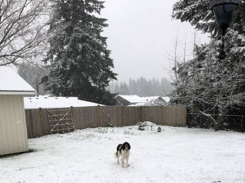 Housesitting assignment in Mill Creek, Washington, United States