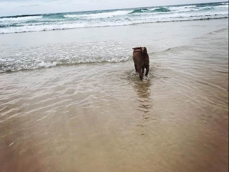 Housesitting assignment in Pottsville Beach, New South Wales, Australia
