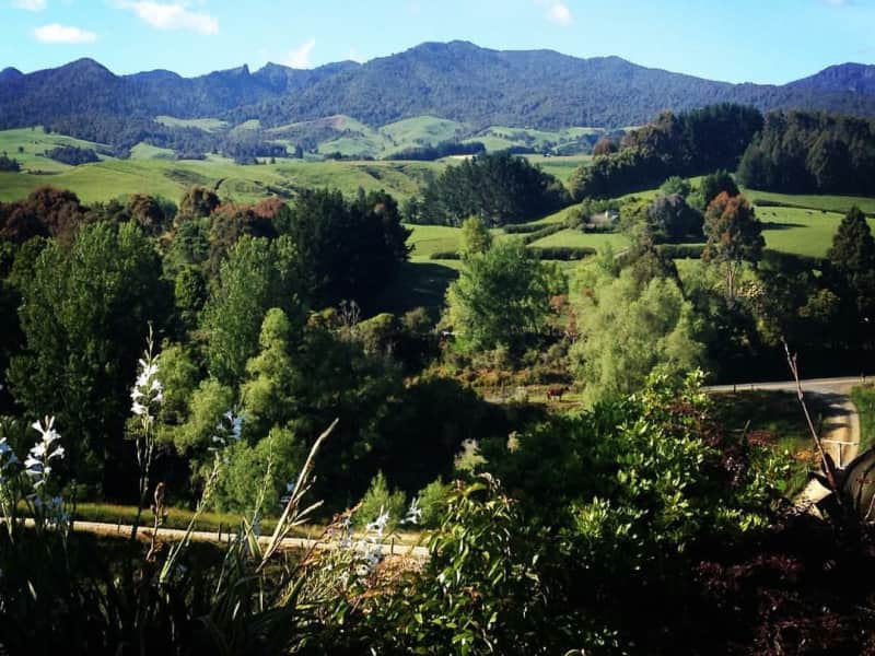 Housesitting assignment in Pirongia, New Zealand