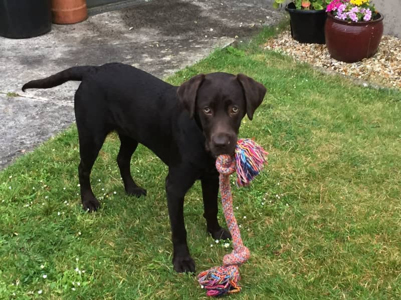 Housesitting assignment in Pembroke, United Kingdom