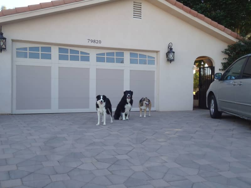 Housesitting assignment in Palm Desert, California, United States