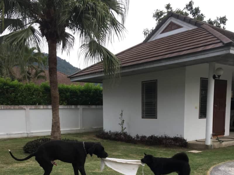 Housesitting assignment in Hua Hin, Thailand