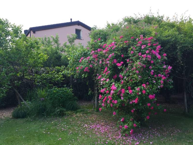 Housesitting assignment in Reggio nell'Emilia, Italy