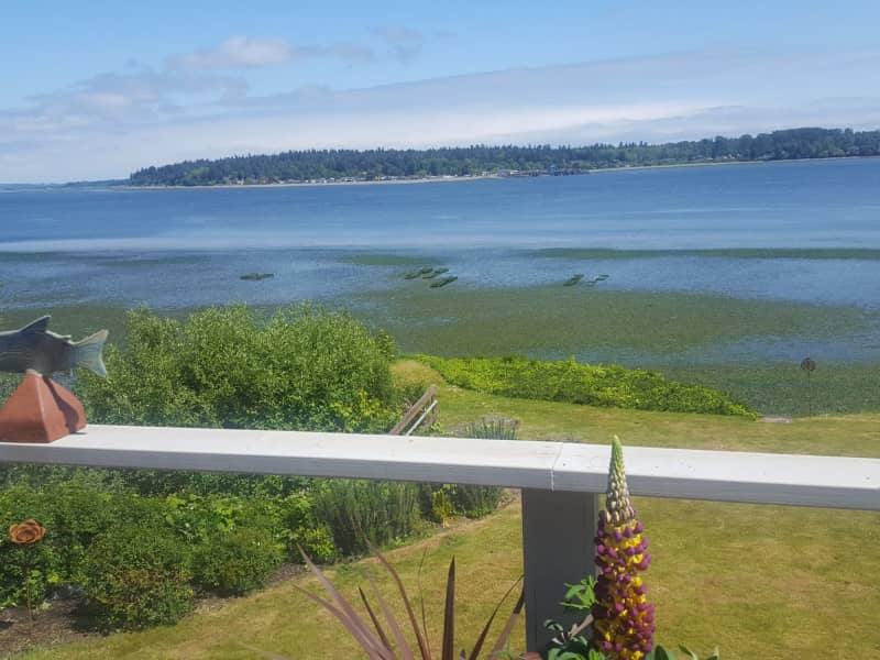 Housesitting assignment in Lummi Island, Washington, United States