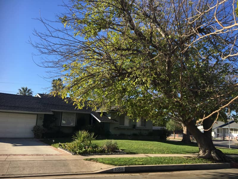 Housesitting assignment in Canoga Park, California, United States