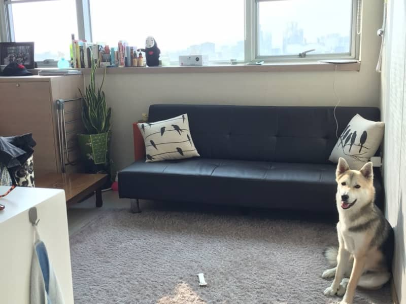 Housesitting assignment in Goyang-si, South Korea