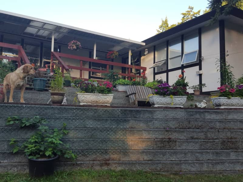 Housesitting assignment in Chemainus, British Columbia, Canada