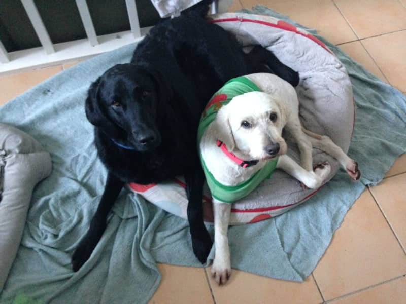 Eloise & Liam from Newcastle, New South Wales, Australia