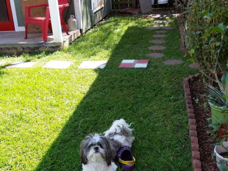 Housesitting assignment in Baton Rouge, Louisiana, United States