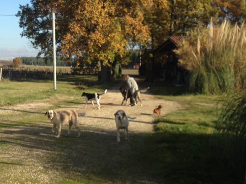 Housesitting assignment in Campsas, France