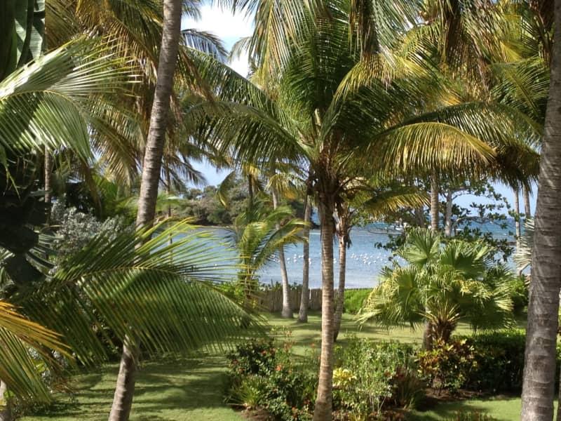 Housesitting assignment in Saint George's, Grenada