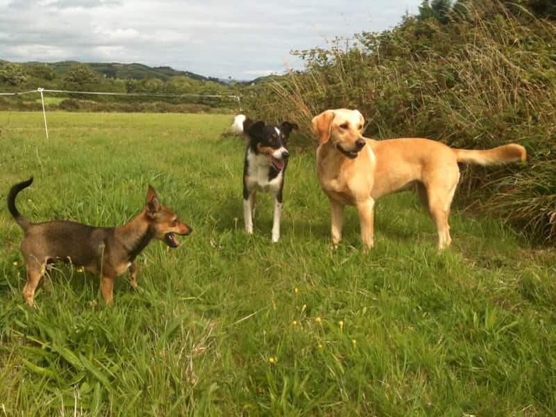 Housesitting assignment in Skibbereen, Ireland