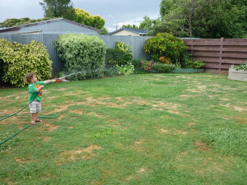 Housesitting assignment in Palmerston North, New Zealand