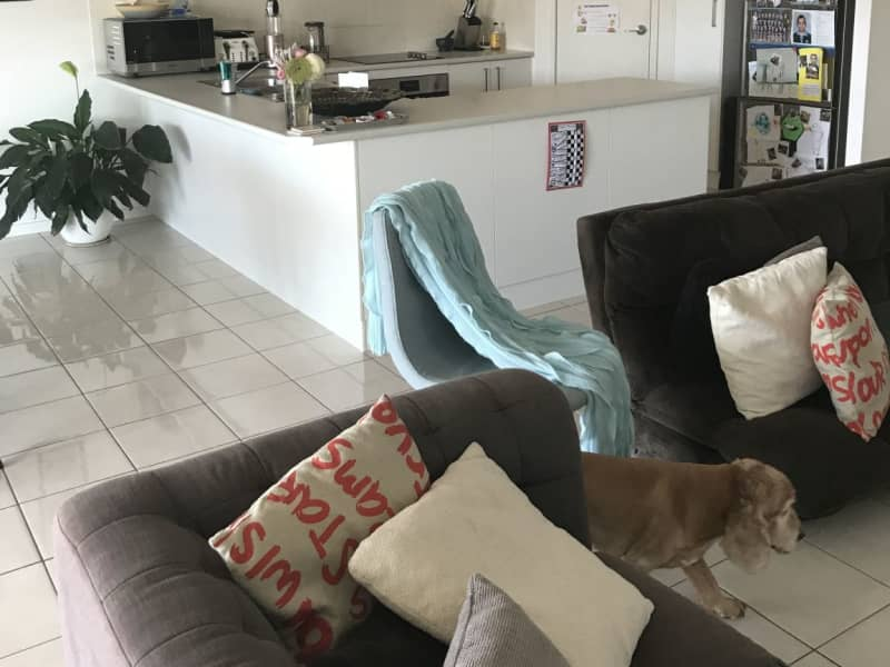 Housesitting assignment in Camp Hill, Queensland, Australia